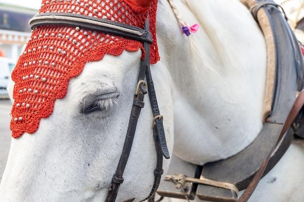 Zbliżenie głowy białego konia w eleganckiej uprzęży.