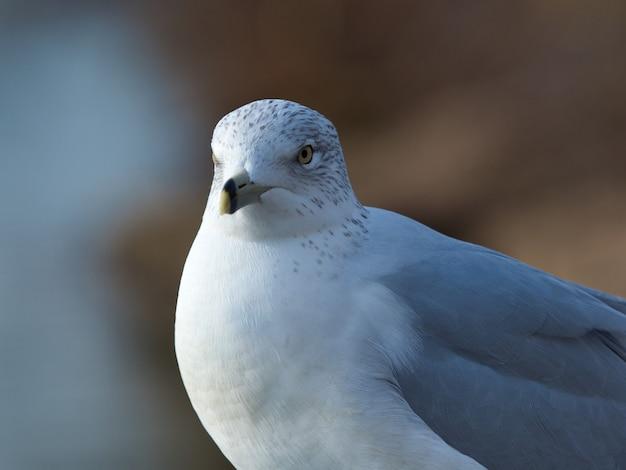 Zbliżenie gołębicy giełdowej z żółtymi oczami pod światłami
