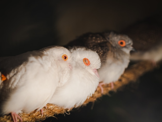Zbliżenie gołębie siedzą na arkanie na plamy tle. zwierzę, ptak, koncepcja rodziny.