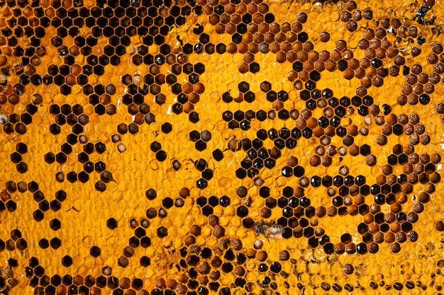 Zbliżenie grzebienia pszczelego, wzór plastra miodu z gniazdem pszczół