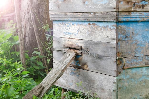 Zbliżenie gwiaździstego ula z pszczołami