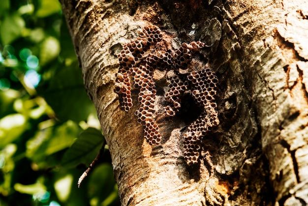Zbliżenie istny pszczoła rój na drzewnej barkentynie