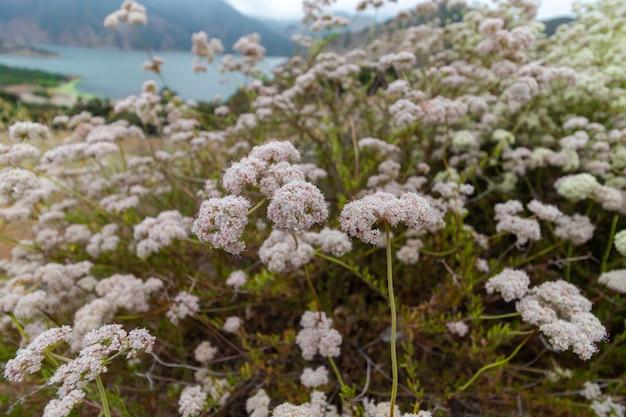 Zbliżenie jasnoróżowych kwiatów uchwyconych nad jeziorem pyramid w kalifornii