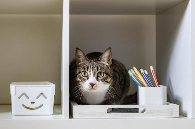Zbliżenie kaganiec ładny zabawny kot siedzi w szafie półka relaks spędzanie czasu w domu
