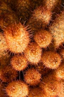 Zbliżenie: kaktusy