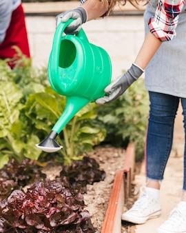 Zbliżenie: kobieta ogrodnik podlewania roślin z konewki
