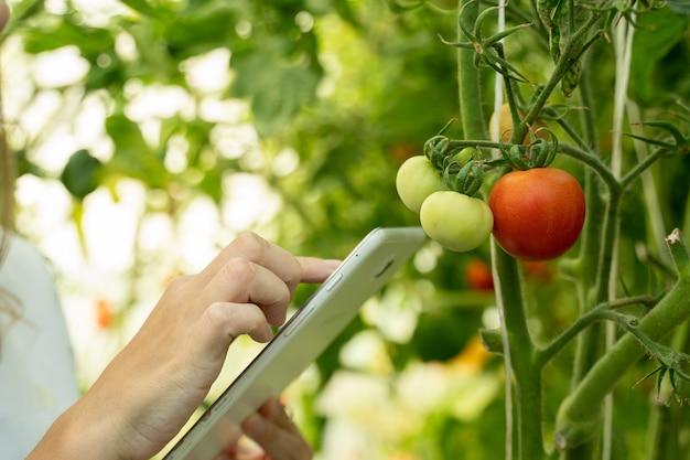 Zbliżenie kobieta rolnik w białej koszuli z cyfrowym tabletem w szklarni monitoruje wzrost...