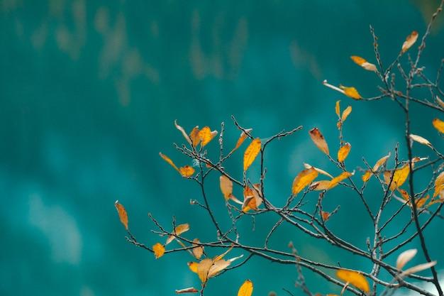 Zbliżenie kolor żółty opuszcza na gałąź z błękitnym zamazanym tłem