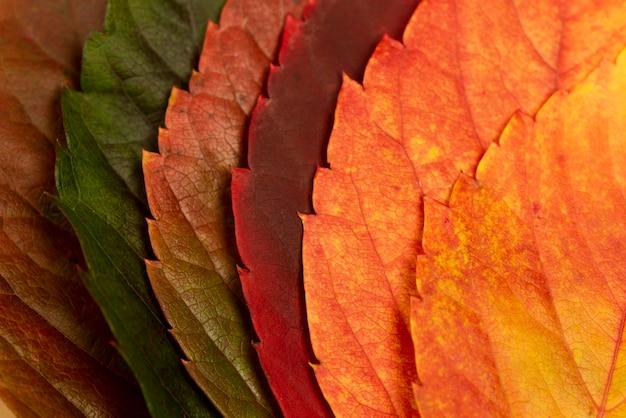 Zbliżenie kolorowych liści jesienią