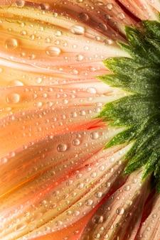 Zbliżenie: koralowy kolorowy kwiat z kropli wody