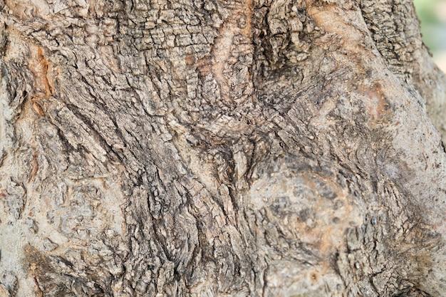 Zbliżenie kory drzewa oliwnego, streszczenie tekstura tło.