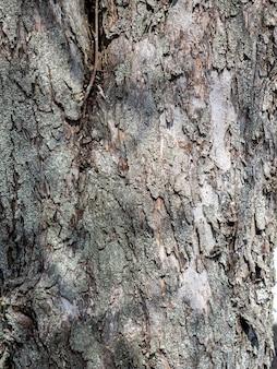 Zbliżenie kory drzewa. pionowe zdjęcie, struktura drewna