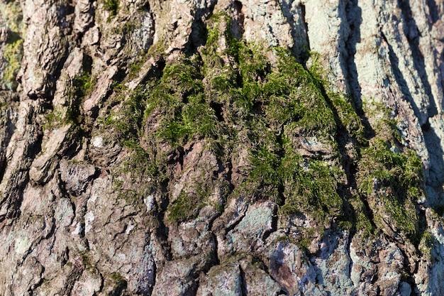 Zbliżenie kory drzewa rosnącego w lesie. mała głębia ostrości