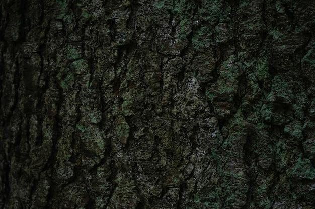 Zbliżenie kory drzewa z mchem