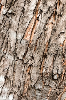 Zbliżenie kory drzewa
