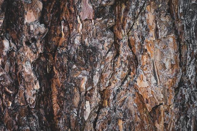 Zbliżenie kory sosny. drewno w tle.