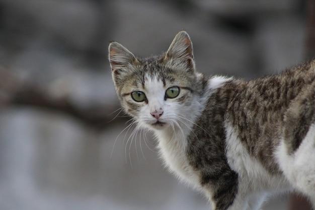 Zbliżenie kota z zielonymi dużymi oczami