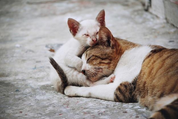 Zbliżenie kotów