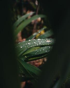 Zbliżenie kropli wody na liściach rośliny