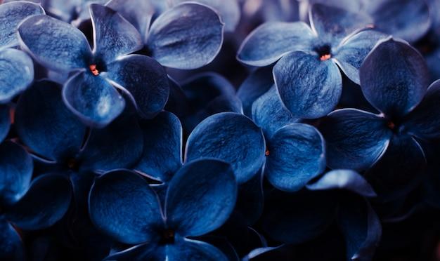 Zbliżenie kwiatów bzu stonowanych w klasycznym niebieskim kolorze.