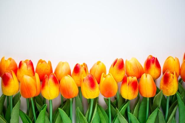 Zbliżenie kwiatów tulipanów z kopią miejsca na białym tle