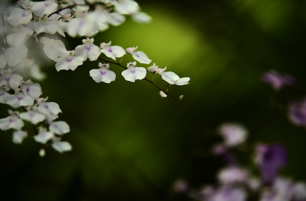 Zbliżenie kwiatów w ogrodzie