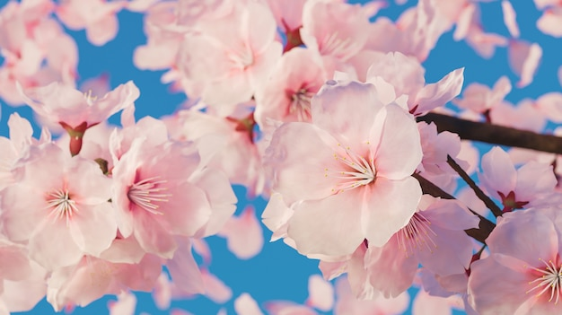 Zbliżenie kwiatów wiśni z dużą ilością płatków pozostających w tyle i czystym błękitnym niebem. renderowanie 3d