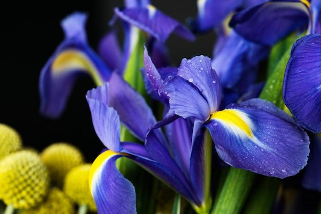 Zbliżenie kwiatu irysa