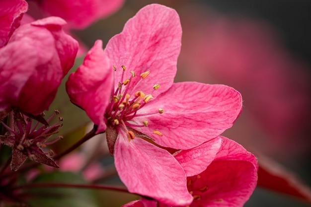 Zbliżenie kwiatu śliwy w ogrodzie pod słońcem z rozmytą zielenią