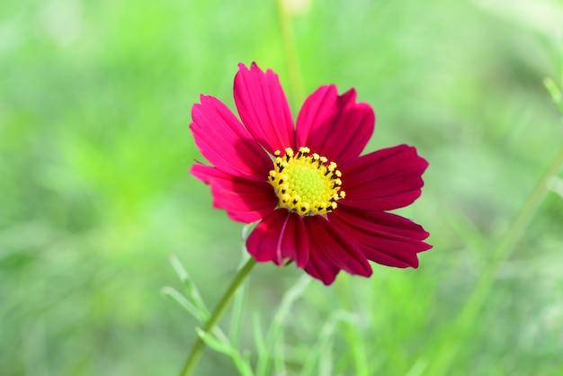 Zbliżenie kwitnący kwiat z łodygą