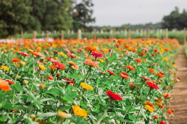 Zbliżenie kwitnących kwiatów w zieleni