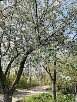 Zbliżenie kwitnących wiosennych gałęzi drzew