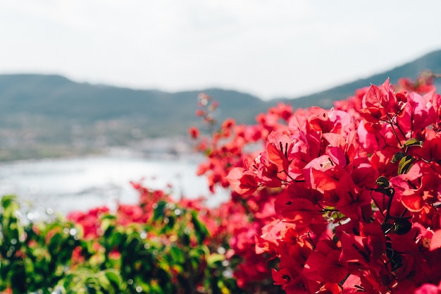 Zbliżenie kwitnienia roślin z niewyraźne tło