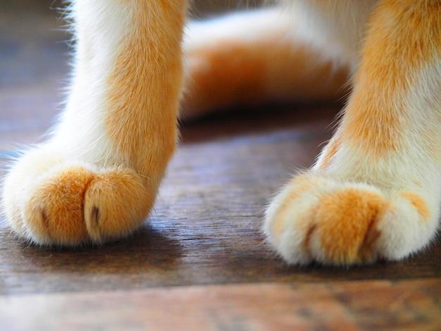 Zbliżenie ładny kot łapa na drewnianej podłodze vintage