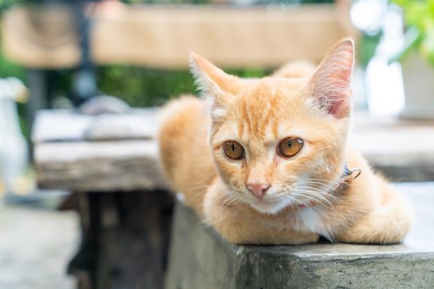 Zbliżenie ładny pomarańczowy kot dziecka