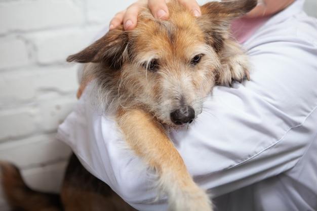 Zbliżenie ładny puszysty pies rasy mieszanej w ramionach lekarza weterynarii
