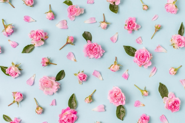 Zbliżenie ładny układ róż