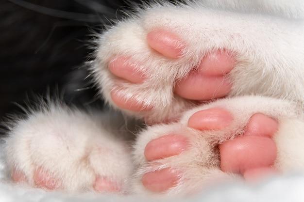 Zbliżenie łap kota z różowymi poduszkami.