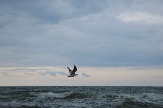 Zbliżenie latającej mewy na burzowym niebie
