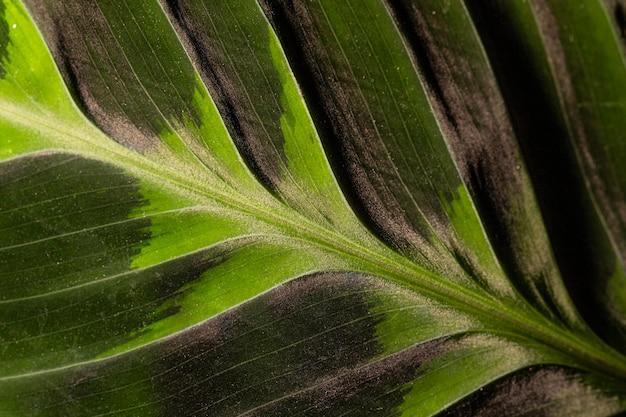 Zbliżenie: liść łodygi z teksturą