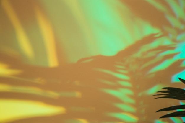 Zbliżenie liści palmowych cień na zielonym tle
