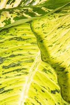 Zbliżenie liści roślin z łodygami