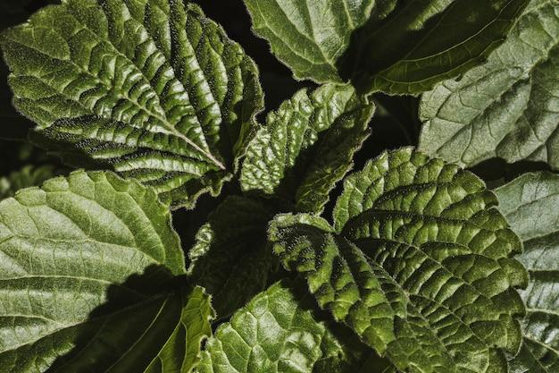 Zbliżenie liści roślin