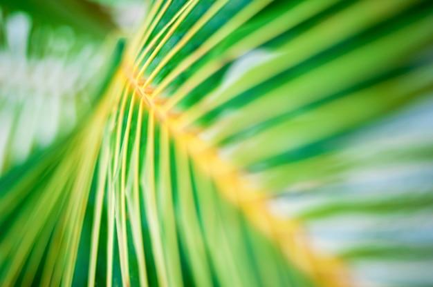 Zbliżenie liścia palmowego, republika dominikańska, słoneczna plaża en punta cana, palmy, na wybrzeżu