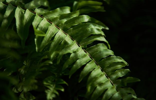 Zbliżenie łodygi zielonych liści paproci
