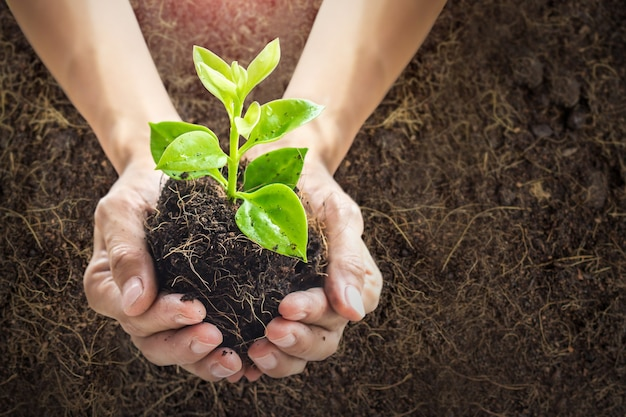 Zbliżenie ludzkich rąk trzymających młodą roślinę w tle gleby ze światłem słonecznymnowa koncepcja życia