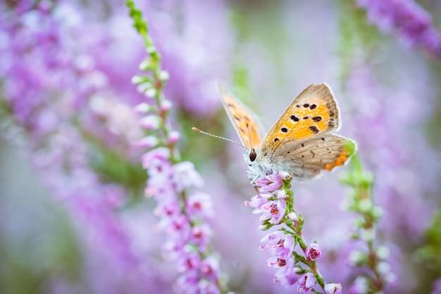 Zbliżenie małego motyla na kwiatku