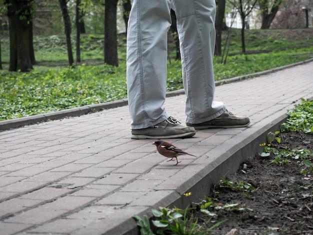 Zbliżenie małego ptaka i mężczyzny.