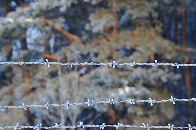 Zbliżenie matowego drutu kolczastego z kryształkami lodu