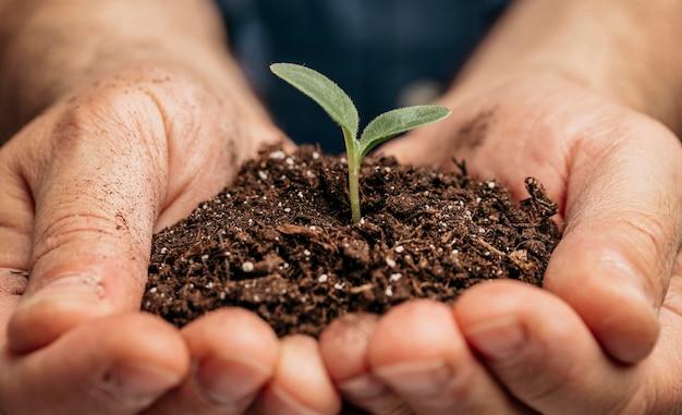 Zbliżenie: męskie ręce trzymające ziemię i małą roślinę